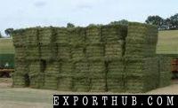 Alfalfa Hay Bales