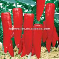 杂交蔬菜种子