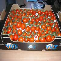 圣女果(小西红柿