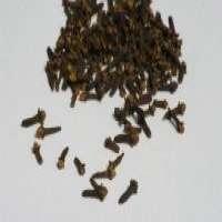Madagascar Dried Clove